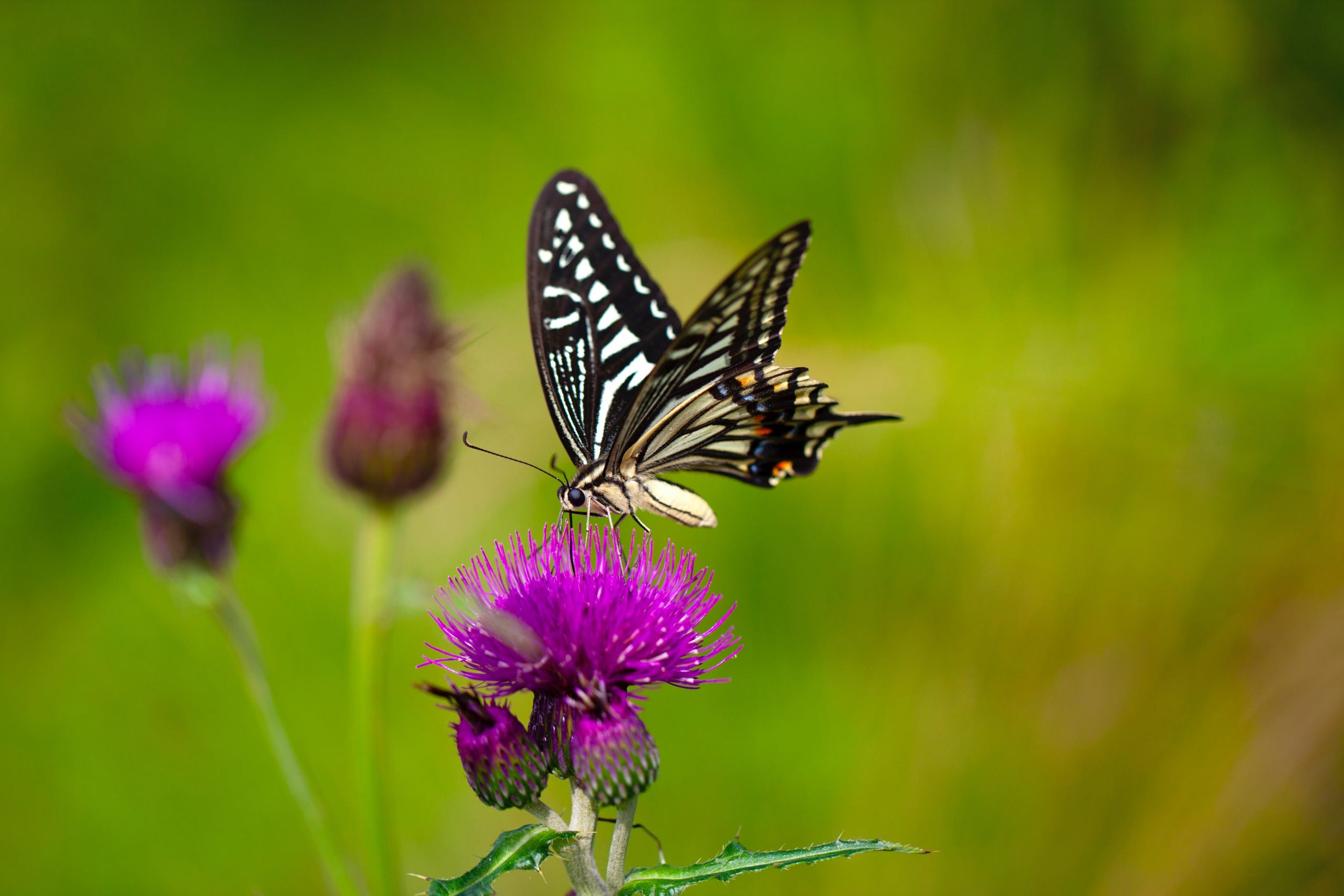 Funding Boost for Biodiversity Projects in Scotland