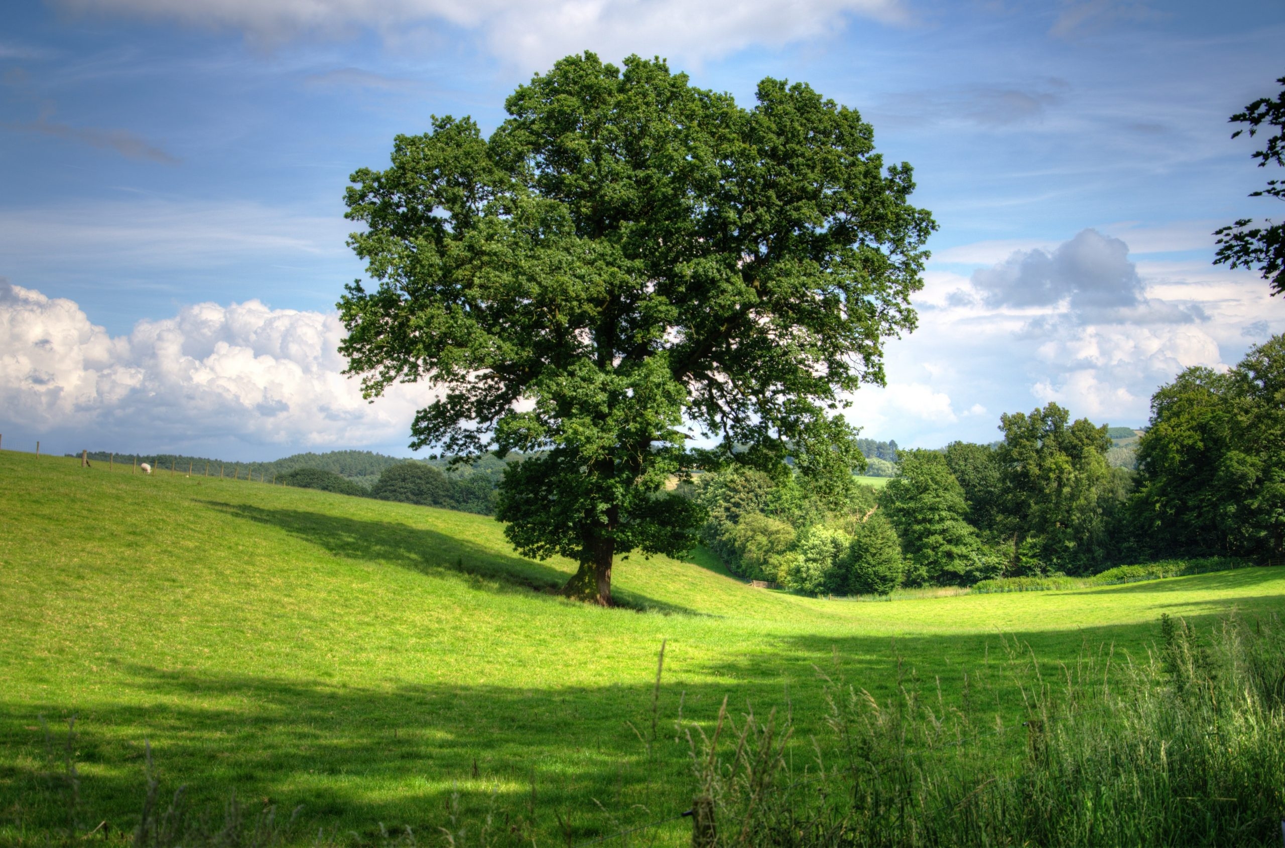 Applications Invited for the Tree Futures Grant