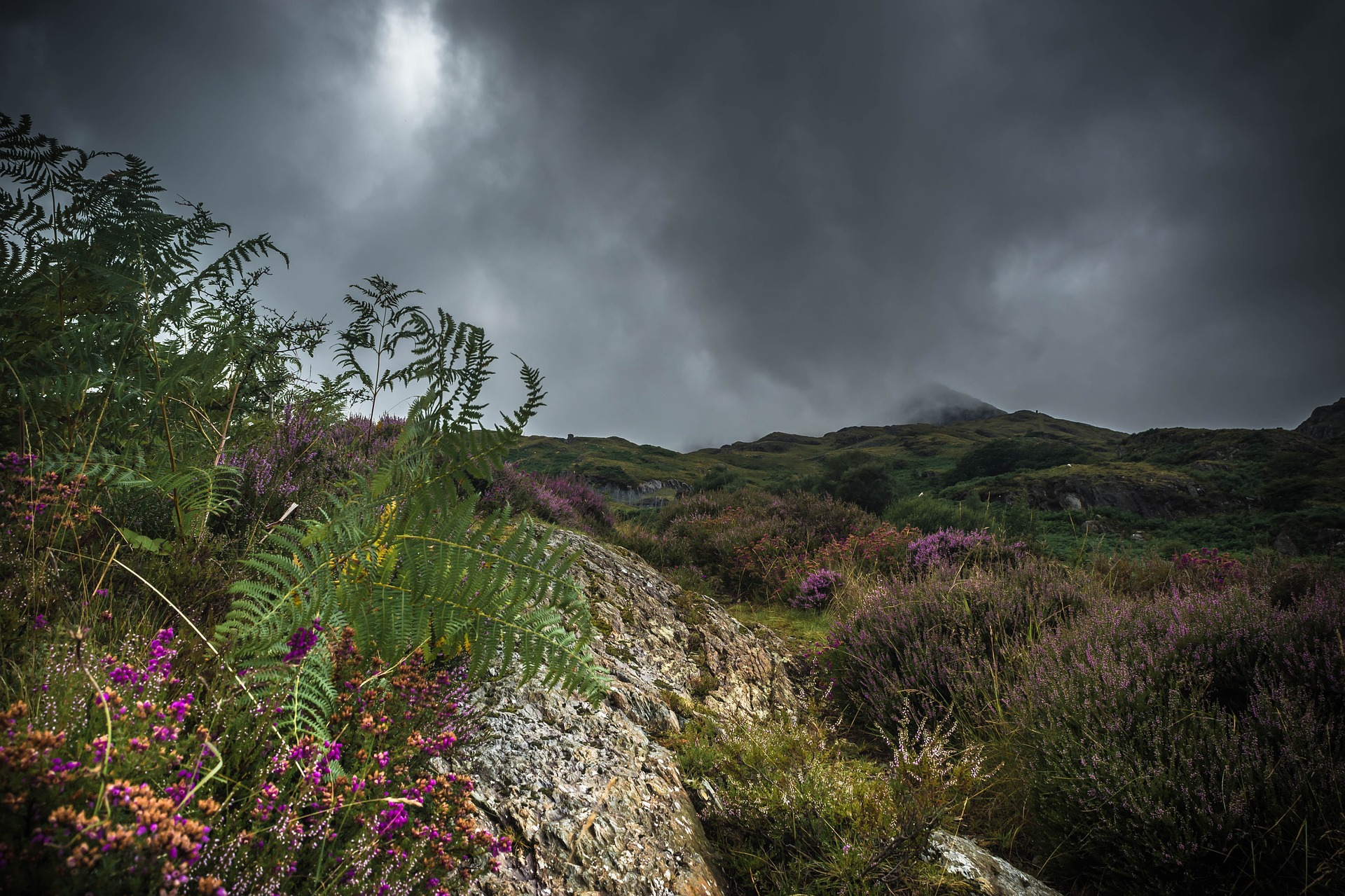 Funding for Welsh Environmental NGOs to Build Capacity