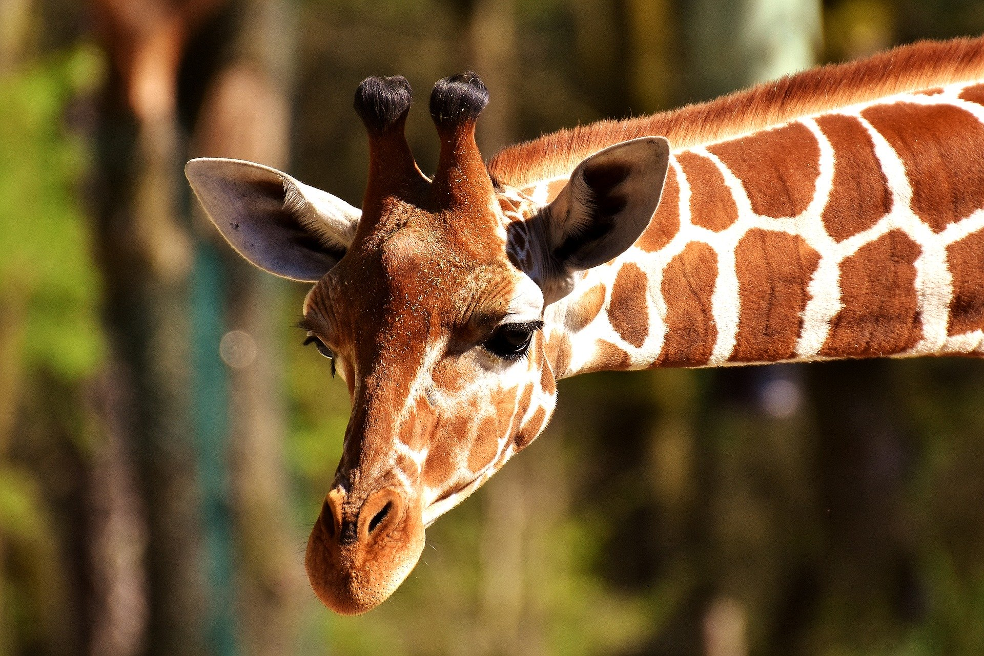 Applications Invited for £100m Zoo Animals Fund