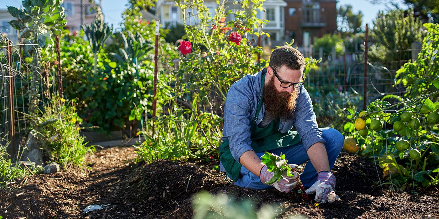 Volunteer tending to a community garden